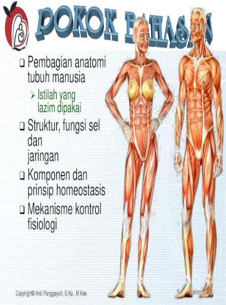Pembagian Anatomi Nbsp Sel Dan Jaringan 2 Pembagian Anatomi Tubuh Manusia Istilah Yang Lazim Dipakai Struktur Fungsi Sel Dan Jaringan Komponen Dan Prinsip Homeostasis Pdf Document